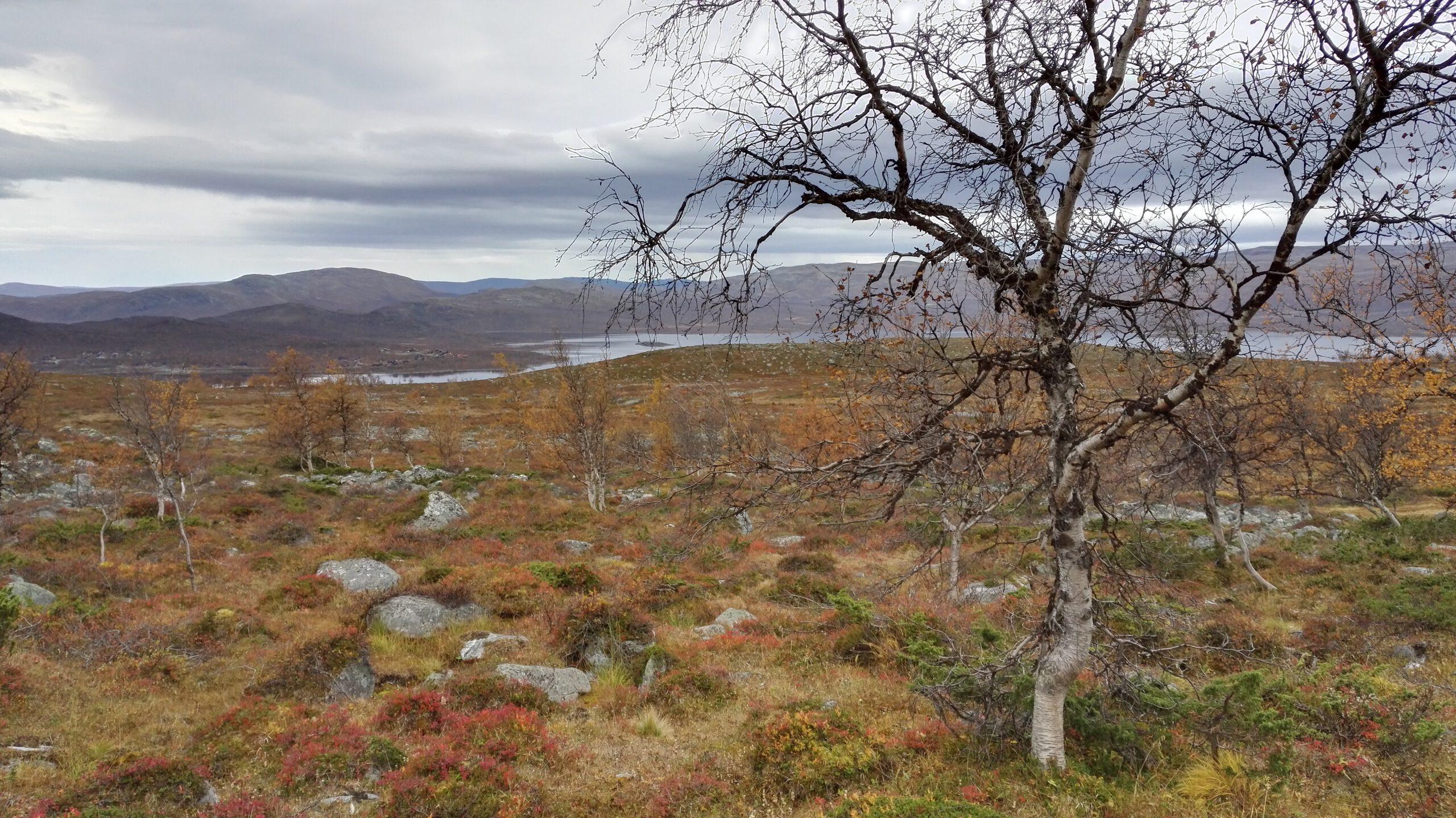 Kilpisjärven mahtava Saana tunturi ruskassa