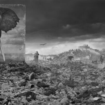 Kuva Nick Brandin näyttelystä Inherit the dust, jossa oikeankokoinen valokuva norsusta on tuotu asutuksen keskelle